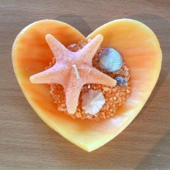 Herzschale Seestern